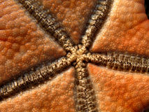 Starfish in Philippines. Detail of starfish on the beach in Philippines Royalty Free Stock Image