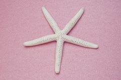Starfish on Pink Royalty Free Stock Photo
