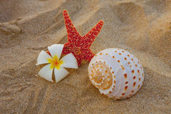 Starfish plumeria flower and shell Royalty Free Stock Photography