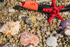 Starfish, plunger tube, differnt shells lying on the pebble beac. Colored seashells,  starfish, set the diver lie on the beach stock photo