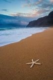 Starfish on Polihale beach at sunset, Kauai Stock Image