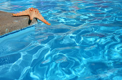 Starfish by Pool Royalty Free Stock Photo