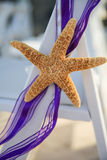 Starfish purple ribbon Royalty Free Stock Images