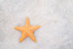 Starfish. Put on cement background Royalty Free Stock Photo