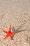 Starfish que moldam a sombra longa na areia dourada Foto de Stock