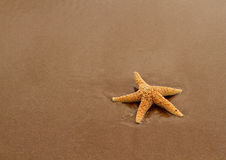 Starfish on the Red Sand Royalty Free Stock Photo