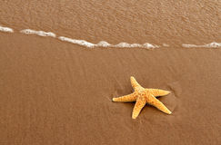 Starfish on the Red Sand Stock Photography