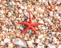 Starfish on coast. Red starfish on sea coast Royalty Free Stock Images