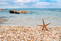 Starfish relax on the beach Royalty Free Stock Image