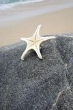 Starfish on Rock by Shore Stock Photos