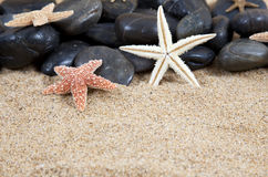 Starfish and rocks stock photography