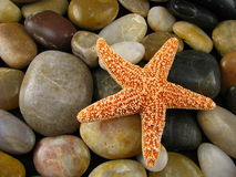 Starfish on Rocks Royalty Free Stock Photography