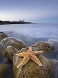 Starfish on a rocky beach. Seascape taken at dusk in a rocky beach of the Costa Blanca of Spain, with a big starfish on the foreground and the ghostly figures of Royalty Free Stock Images