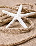 Starfish and rope Stock Photos