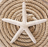 Starfish and rope Stock Photography