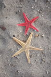 Starfish in sand Royalty Free Stock Photography