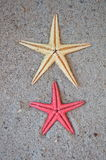 Starfish in sand Stock Photos