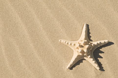 Starfish and sand. Royalty Free Stock Image