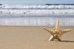 Starfish in sand. Stock Images