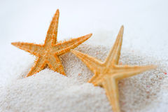 Starfish in sand Royalty Free Stock Photo