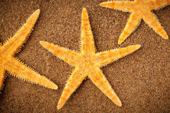 Starfish on the sand Royalty Free Stock Image
