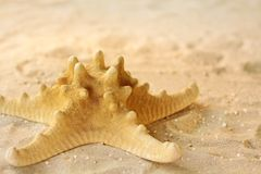 Starfish in the sand Stock Image