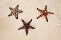 Starfish in the sand Royalty Free Stock Photography