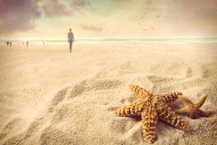 Starfish on the sand Stock Photography