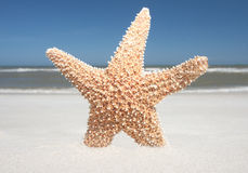 Starfish In The Sand Stock Photos