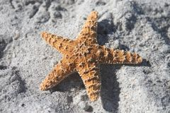Starfish in the Sand. Starfish from the ocean on the beach stock image