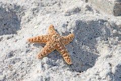 Starfish on the Sand. Starfish from the ocean on sandy beach Stock Photo