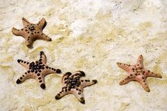 Starfish on sand Stock Image