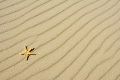 The starfish on sand Royalty Free Stock Image
