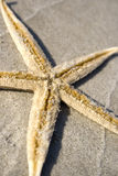 Starfish on the sand. Lone Starfish on the sand with the horizon in the background Royalty Free Stock Photography