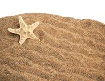 Starfish on a sand Stock Image