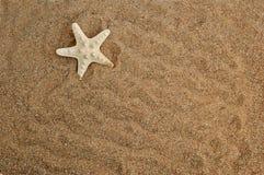 Starfish on a sand Stock Photos
