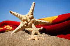 Starfish in the sand. Against a blue sky stock images
