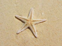 Starfish on sand Stock Photography