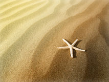 Starfish on a sand Royalty Free Stock Images