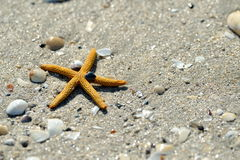 Starfish on the sand Stock Photos