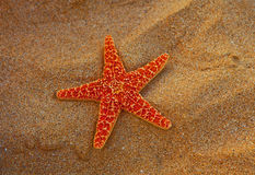 Starfish with sand background Royalty Free Stock Images