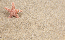 Starfish sand background Royalty Free Stock Image