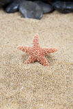 Starfish on sand background stock images