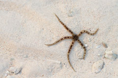 Starfish on sand background Stock Photo