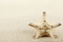 Starfish on sand beach Stock Photo