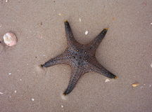 Starfish in sand on beach Royalty Free Stock Photography