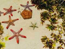 Starfish in sand on beach Royalty Free Stock Images