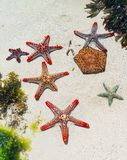 Starfish in sand on beach Stock Photos