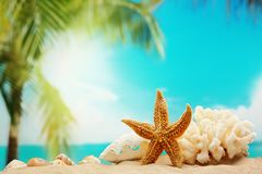 Starfish on sand beach Royalty Free Stock Photo