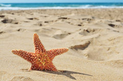 Starfish on the sand of a beach Royalty Free Stock Photos